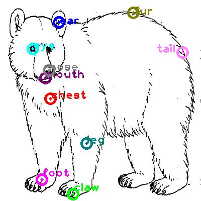 bear_0005.png