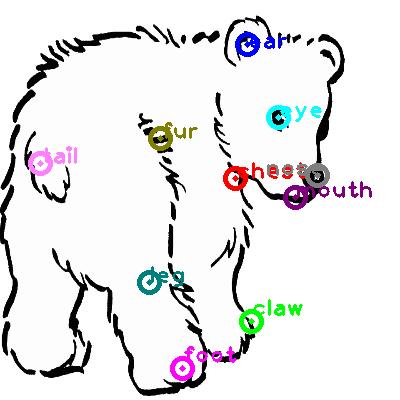 bear_0008.png