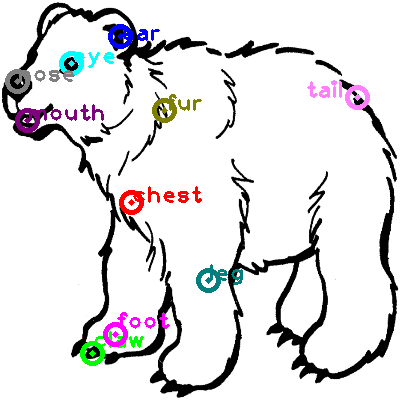 bear_0009.png
