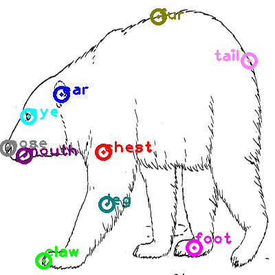 bear_0010.png
