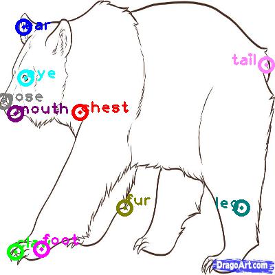 bear_0012.png