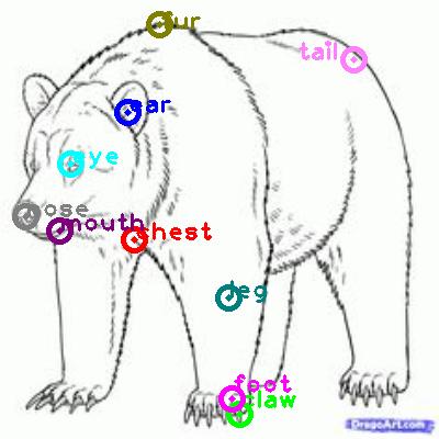 bear_0015.png