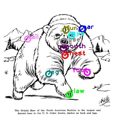 bear_0018.png