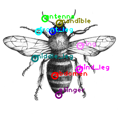 bee_0004.png