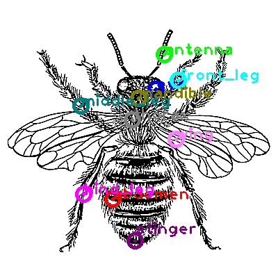 bee_0005.png