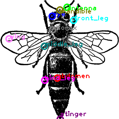 bee_0008.png