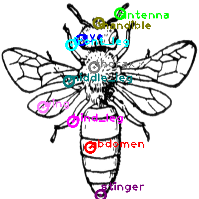 bee_0009.png