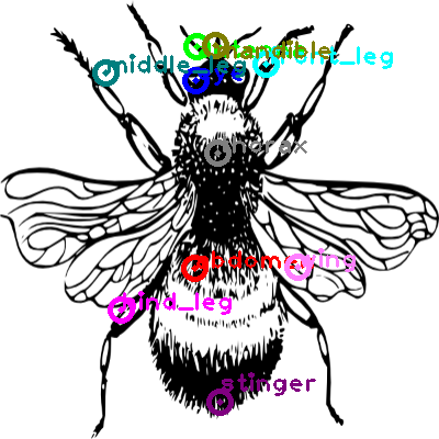 bee_0013.png