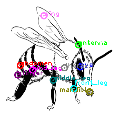 bee_0016.png