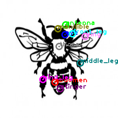 bee_0019.png