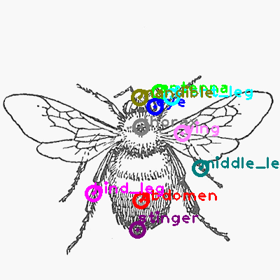 bee_0020.png