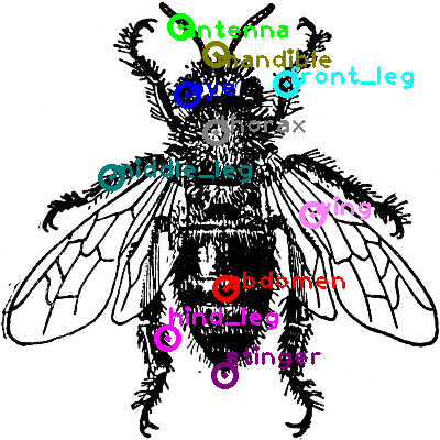 bee_0024.png
