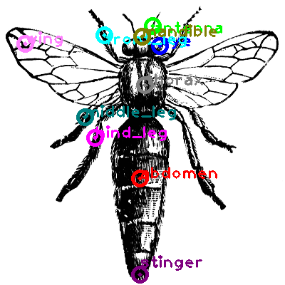 bee_0027.png