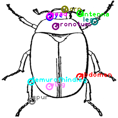 beetle_0008.png