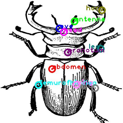 beetle_0010.png
