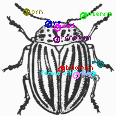 beetle_0011.png