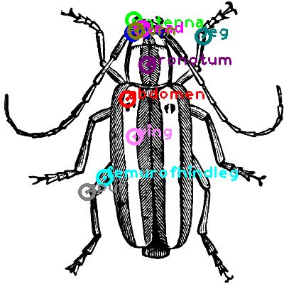 beetle_0013.png