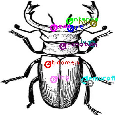 beetle_0015.png