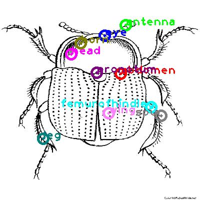 beetle_0017.png