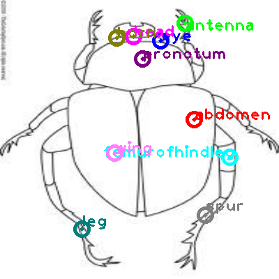 beetle_0018.png