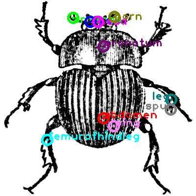 beetle_0020.png