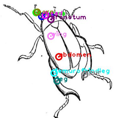 beetle_0024.png