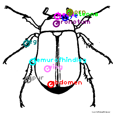 beetle_0032.png