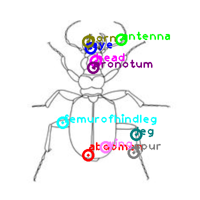 beetle_0034.png