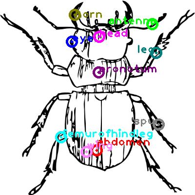beetle_0040.png