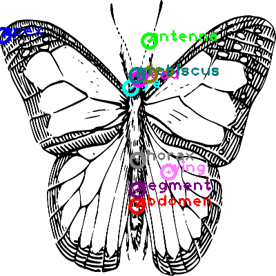 butterfly_0001.png