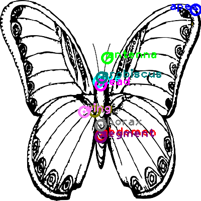 butterfly_0003.png