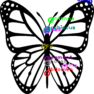 butterfly_0004.png