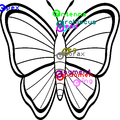 butterfly_0005.png