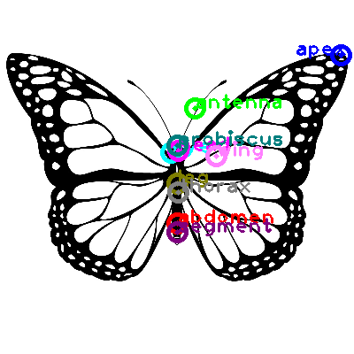 butterfly_0009.png