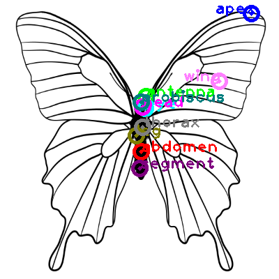 butterfly_0010.png