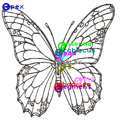 butterfly_0011.png