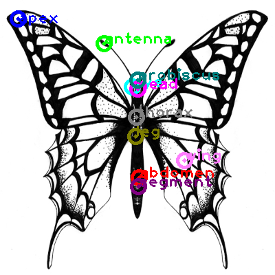 butterfly_0012.png