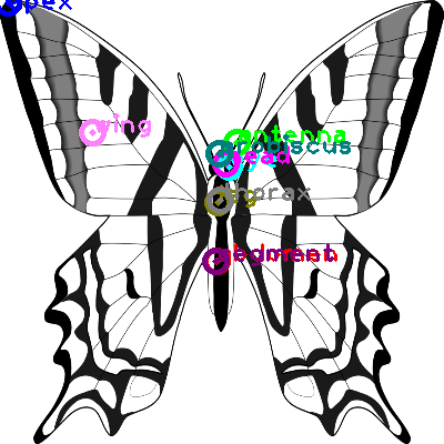 butterfly_0014.png
