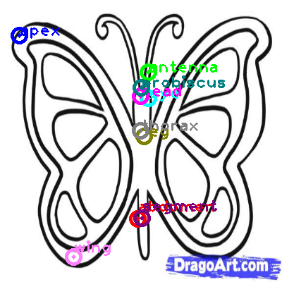 butterfly_0015.png
