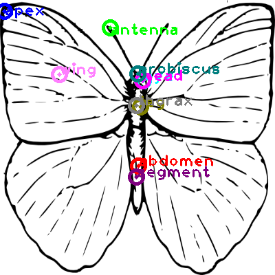 butterfly_0016.png