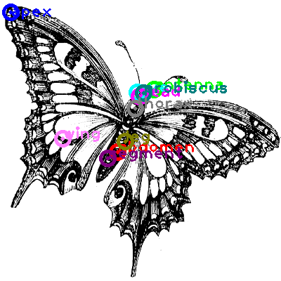 butterfly_0019.png
