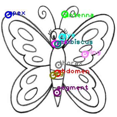 butterfly_0020.png