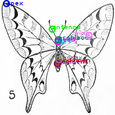 butterfly_0021.png