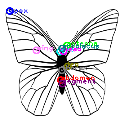 butterfly_0024.png
