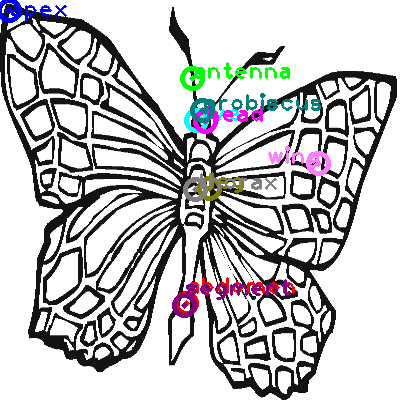 butterfly_0026.png