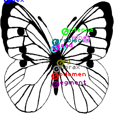 butterfly_0027.png