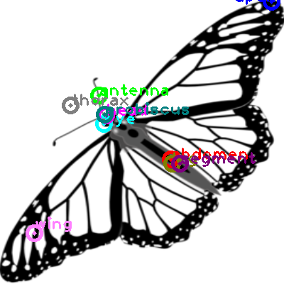butterfly_0030.png