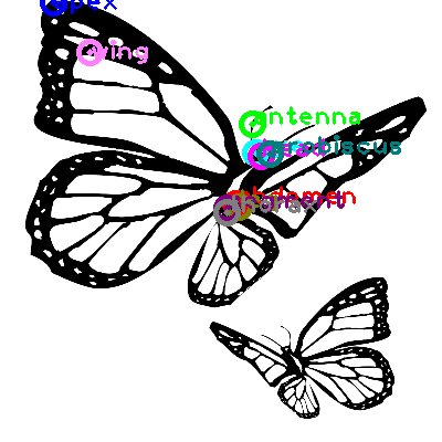 butterfly_0032.png