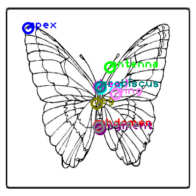 butterfly_0033.png