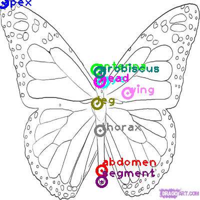 butterfly_0037.png